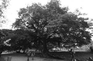 El Ministerio de Ambiente (MiAmbiente) es la institución encargada de la elaboración y presentación de los estudios de impacto ambiental, su evaluación y la emisión de sus respectivas resoluciones en Panamá. Foto: Archivo. Epasa.