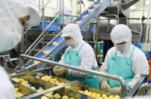 Limpiar papas es labor sólo apta para humanos. En una fábrica en Asahikawa, robots no pudieron con esa tarea. Foto / Noriko Hayashi para The New York Times.