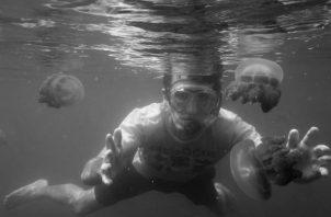 Las ciencias nacen gracias a la angustia lúcida de los que se preguntaban por el fondo de las cosas. Las medusas del lago de agua salada de Kakaban, en Indonesia, atraen a los exploradores.  Foto: EFE.