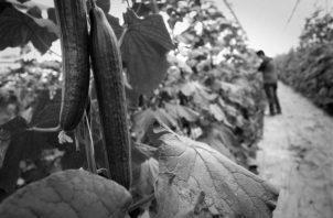La bioeconomía está enfocada en modificar el proceso de la producción mundial de alimentos, de bienes, y de servicios. Foto: EFE.