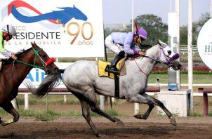 Darío Ruth competirá en el Hipódromo Presidente Remón.