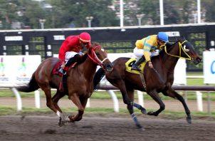 Lady Eagle (rojo) y Royal Dynasty pudieran ganar esta carrera.