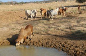 Más de 5,000 pequeños  productores se han beneficiado del plan de cosecha de agua. Foto/Cortesía