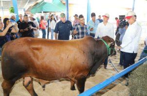 Estados Unidos autorizado un laboratorio de referencia en Honduras para realizar los análisis respectivos. Foto/Cortesía