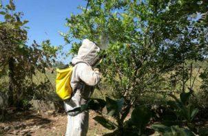 Bomberos advierten a la población por presencia de abejas africanizadas. Foto/Cortesía