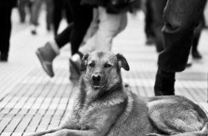 Animales que se olvidan en las calles, como si fueran cualquier plato servido para los gallotes; mascotas que solo algunas horas antes compartían con miembros de un hogar que los olvida. Foto: EFE.