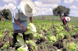 El sector agropecuario está esforzándose por mantener el suministro.