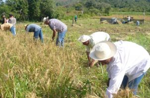 La medida busca apoyar a los productores en el proceso de expedición de la mayor cantidad de salvoconductos. Foto/Archivo