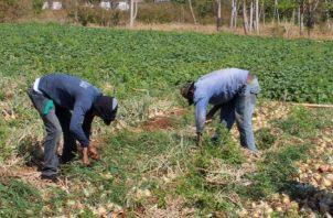 El sector agro no ha dejado de producir alimentos. Archivo