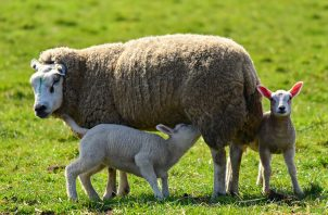 Las actividades pastoriles tienen lugar lejos del bullicio citadino y del coronavirus. Pixabay