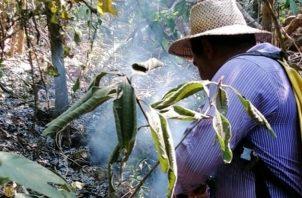 Las autoridades y voluntarios trabajan para sofocar estos fuegos en áreas boscosas. Foto: Thays Domínguez.