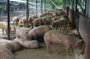 La compra de cerdos será por 2.5 millones de dólares.