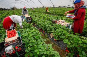 Producción agropecuaria es de suma importancia ante crisis. EFE