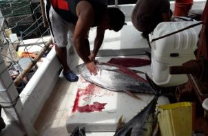 Existen 4,359 embarcaciones pesqueras registradas en el país. Foto: Cortesía