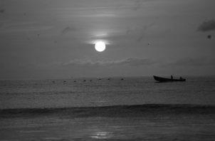Somos dichosos de tener una gran diversidad de fauna, bosques hermosos, ríos caudalosos, playas deslumbrantes, por esas razones y muchas más, qué bella es Panamá. Foto: Archivo.