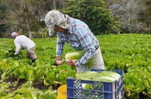 Mayor cantidad, calidad y frescura prometen los agricultores en sus productos a partir del 2021. Aurelio Martínez