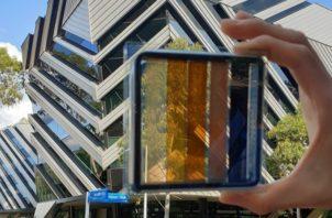 Prototipo de una célula solar semitransparente de perovskita. Foto: EFE