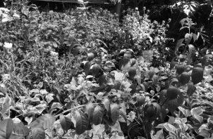 Las plantas nos agradan porque son buenas compañeras, nos relajan, nos entretienen. Foto: Cortesía del autor.