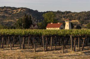 Pagan hasta 25 mil dólares por tonelada de uvas Beckstoffer, cinco veces el promedio del Valle de Napa. Foto / Cayce Clifford para The New York Times.