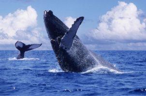 Desde el 4 de junio empiezan otras consultas sobre tiburones y la Raya.