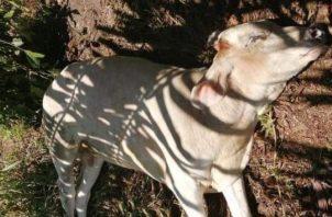Se recomienda a los ganaderos de la zona mantener sus animales vacunados anualmente por tratarse de una zona endémica a rabia.