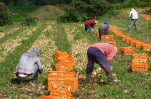 Algunas de las categorías de actividad económica que mostraron un comportamiento positivo fueron: la explotación minera; el sector agropecuario, entre otras. Foto/Archivo