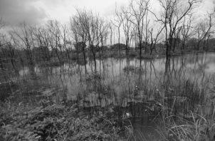 En los últimos 20 años se han removido más de 2 mil hectáreas de manglares en la provincia de Colón, para la construcción de los puertos y la expansión de la Zona Libre. Foto: Archivo.