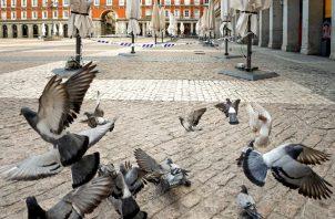 Existen palomas de ciudad cuyo plumaje especial, a modo de sofisticado filtro que desintoxicar, les ayuda a reducir el impacto. EFE/Emilio Naranjo