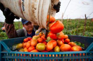 México exportó el 75.7% de sus productos agroalimentarios. EFE