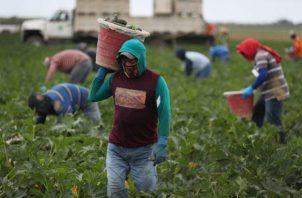 La nueva norma pretende el pago de derechos de autor a quienes registren nuevas variedades de semillas. EFE