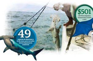 En Panamá se han documentado formalmente 46 especies de tiburones y 33 de rayas, pero no todas tienen importancia comercial o están representadas en los desembarcos.