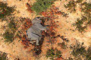 Una foto sin fecha proporcionada por la organización sin fines de lucro National Park Rescue de un cadáver en el delta del Okavango de Botsuana, donde 356 elefantes han muerto en meses recientes. (National Park Rescue/vía The New York Times)