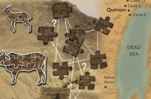 Los fragmentos de los Rollos del Mar Muerto hechos de pieles de animales fueron clasificados según el ADN antiguo.