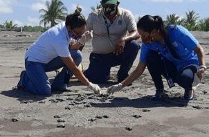 El Refugio de Vida Silvestre La Barqueta es un sitio de gran importancia para la anidación de tortugas marinas, principalmente de la tortuga lora.