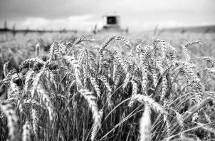 Tres empresas multinacionales controlan el 53.4% del comercio internacional de semillas, mientras que 10, controlan el 95.0% de los agrotóxicos y un número similar, el 41.0% del mercado de los fertilizantes. Foto: EFE.