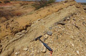 Los otolitos fósiles en el sedimento son tan pequeños que en algunos casos es necesario usar una lupa y arrastrarse por el suelo para encontrarlos. Foto: Cortesía/Jorge Carrillo-Briceño