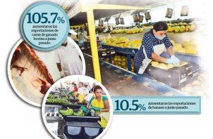 Un 10.5% aumentó la exportación de banano hasta junio en comparación a igual periodo del año anterior.
