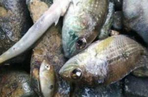 Quieren saber si es algún tipo de sustancia lo que está matando a los peces. Fotos: Diómedes Sánchez S.