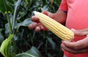 El ICA tiene por objeto contribuir al desarrollo sostenido del sector agropecuario. EFE