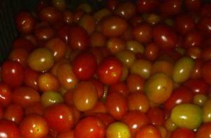 Unas 15 cajas de tomate cherry fueron decomisadas este martes en un vehículo pick up color rojo en el puesto de control de Guabalá.