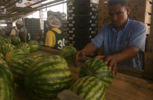 """Se debe aprovechar la posición geográfica de Panamá, y aspirar a ser el """"Hub"""" de Alimentos de las Américas."""