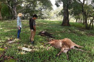 Hace aproximadamente un año se dio un hecho similar en la comunidad de Llano Catival en el distrito de Mariato