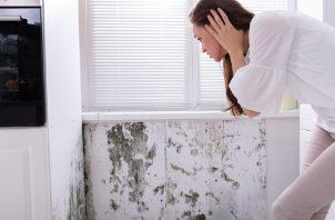La humedad en casa, un problema común. Cortesía