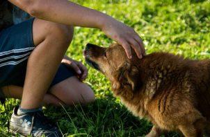 Un perro puede enseñar a los niños sobre los límites y el respeto. Pixabay