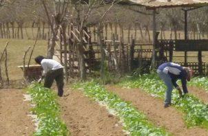El proyecto busca mejorar la cadena de valor y garantizar que los productores puedan tener acceso a la tecnología.