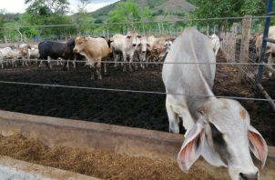 Activistas por los derechos de los animales han celebrado la decisión. Foto: Archivo/Ilustrativa.