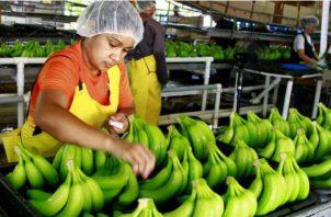 Las exportaciones panameñas no han podido recuperarse del golpe de la pandemia. En los primeros siete meses del año reportaron una caída de 8.1%, debido factores vinculados directamente a la pandemia del coronavirus.