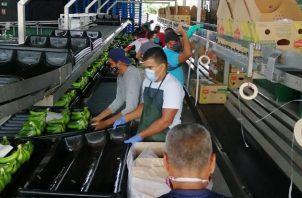 Las exportaciones panameñas no han podido recuperarse del golpe de la pandemia. Foto/Archivo
