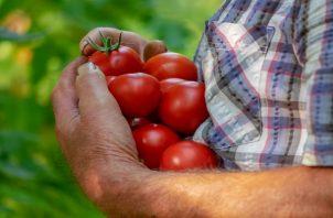 El tomate está en sobreproducción. (Imagen ilustrativa: Pixabay)