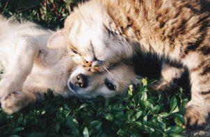 La esterilización ofrece varios beneficios para la salud del animal de compañía de por vida. Foto: Ilustrativa / Pixabay